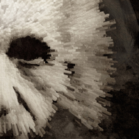 Einstein Canvas Print Detail